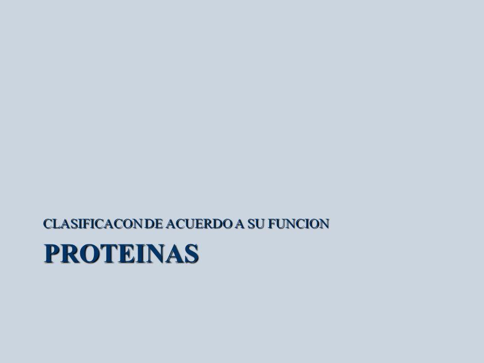 PROTEINAS CLASIFICACON DE ACUERDO A SU FUNCION
