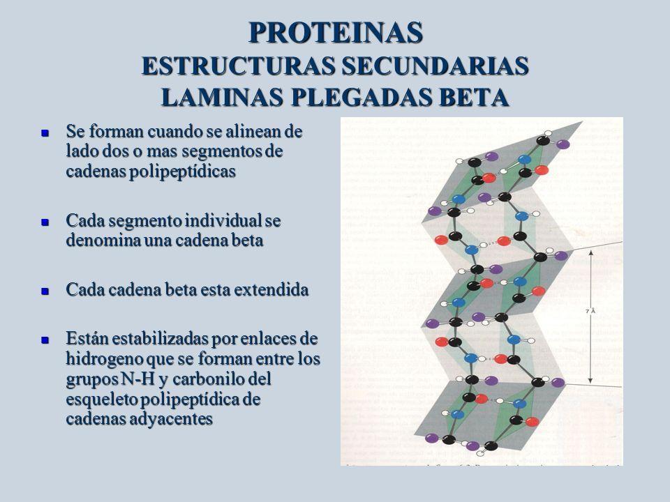 PROTEINAS ESTRUCTURAS SECUNDARIAS LAMINAS PLEGADAS BETA Se forman cuando se alinean de lado dos o mas segmentos de cadenas polipeptídicas Se forman cu