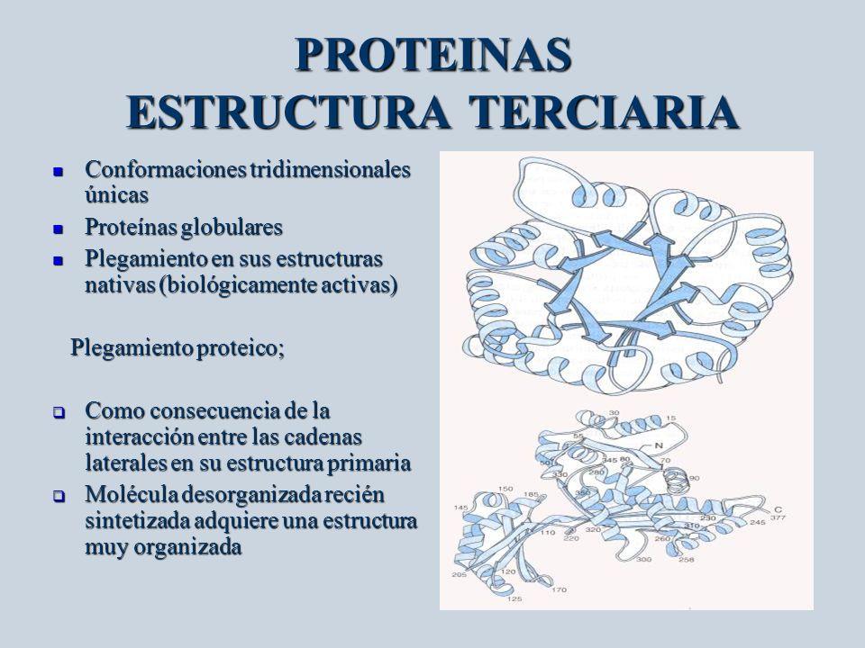 PROTEINAS ESTRUCTURA TERCIARIA Conformaciones tridimensionales únicas Conformaciones tridimensionales únicas Proteínas globulares Proteínas globulares