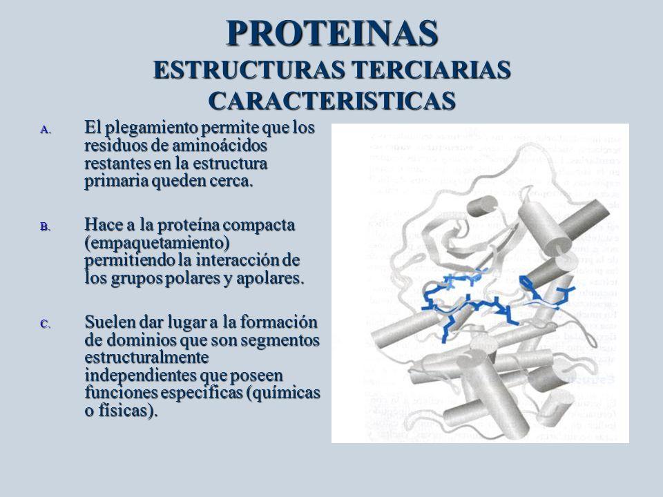 PROTEINAS ESTRUCTURAS TERCIARIAS CARACTERISTICAS A. El plegamiento permite que los residuos de aminoácidos restantes en la estructura primaria queden