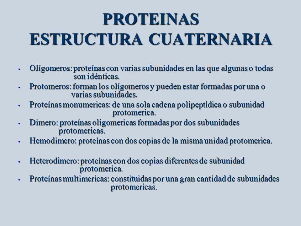 PROTEINAS ESTRUCTURA CUATERNARIA Olígomeros: proteínas con varias subunidades en las que algunas o todas son idénticas. Olígomeros: proteínas con vari