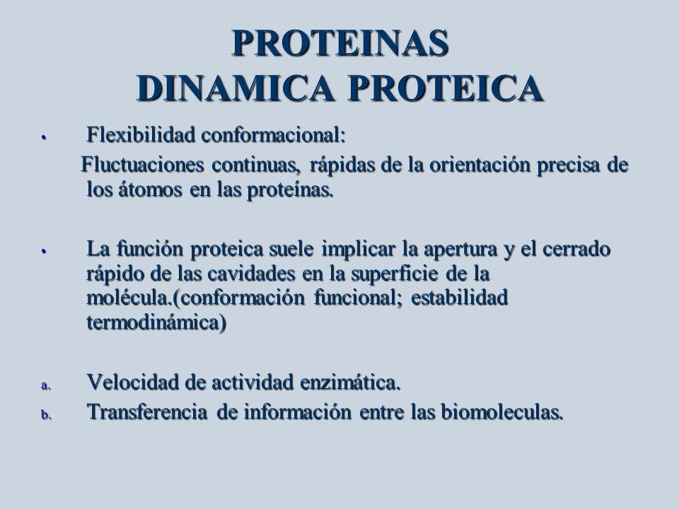 PROTEINAS DINAMICA PROTEICA Flexibilidad conformacional: Flexibilidad conformacional: Fluctuaciones continuas, rápidas de la orientación precisa de lo