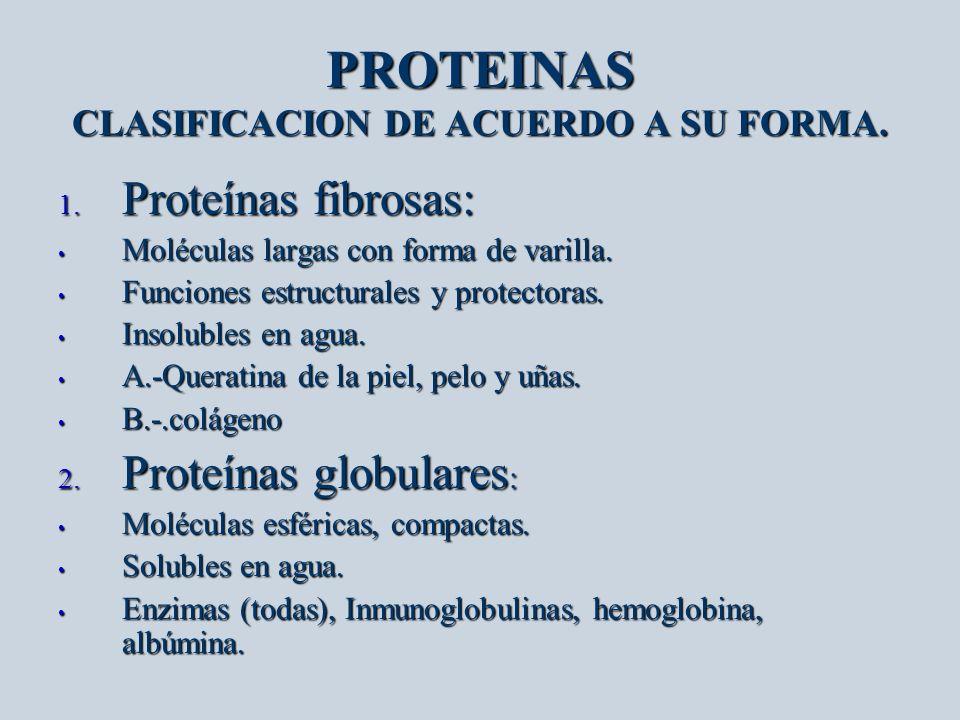 PROTEINAS CLASIFICACION DE ACUERDO A SU FORMA. 1. Proteínas fibrosas: Moléculas largas con forma de varilla. Moléculas largas con forma de varilla. Fu