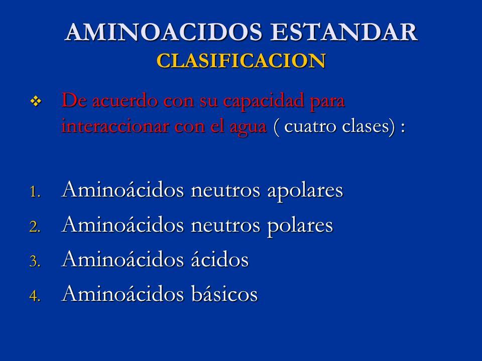 AMINOACIDOS ESTANDAR CLASIFICACION De acuerdo con su capacidad para interaccionar con el agua ( cuatro clases) : De acuerdo con su capacidad para inte
