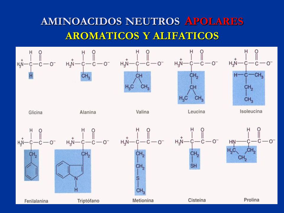 AMINOACIDOS NEUTROS A POLARES AROMATICOS Y ALIFATICOS