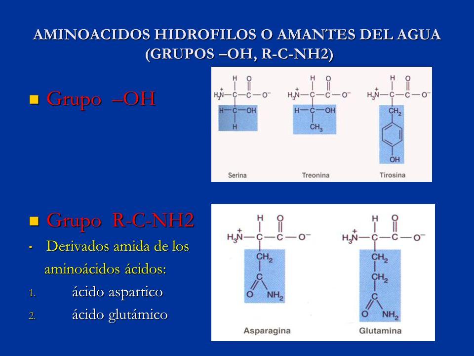 AMINOACIDOS HIDROFILOS O AMANTES DEL AGUA (GRUPOS –OH, R-C-NH2) Grupo –OH Grupo –OH Grupo R-C-NH2 Grupo R-C-NH2 Derivados amida de los Derivados amida