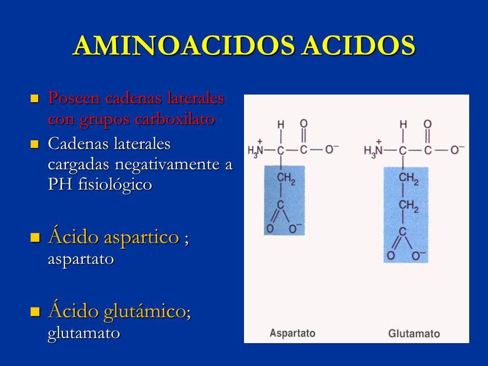 AMINOACIDOS ACIDOS Poseen cadenas laterales con grupos carboxilato Poseen cadenas laterales con grupos carboxilato Cadenas laterales cargadas negativa
