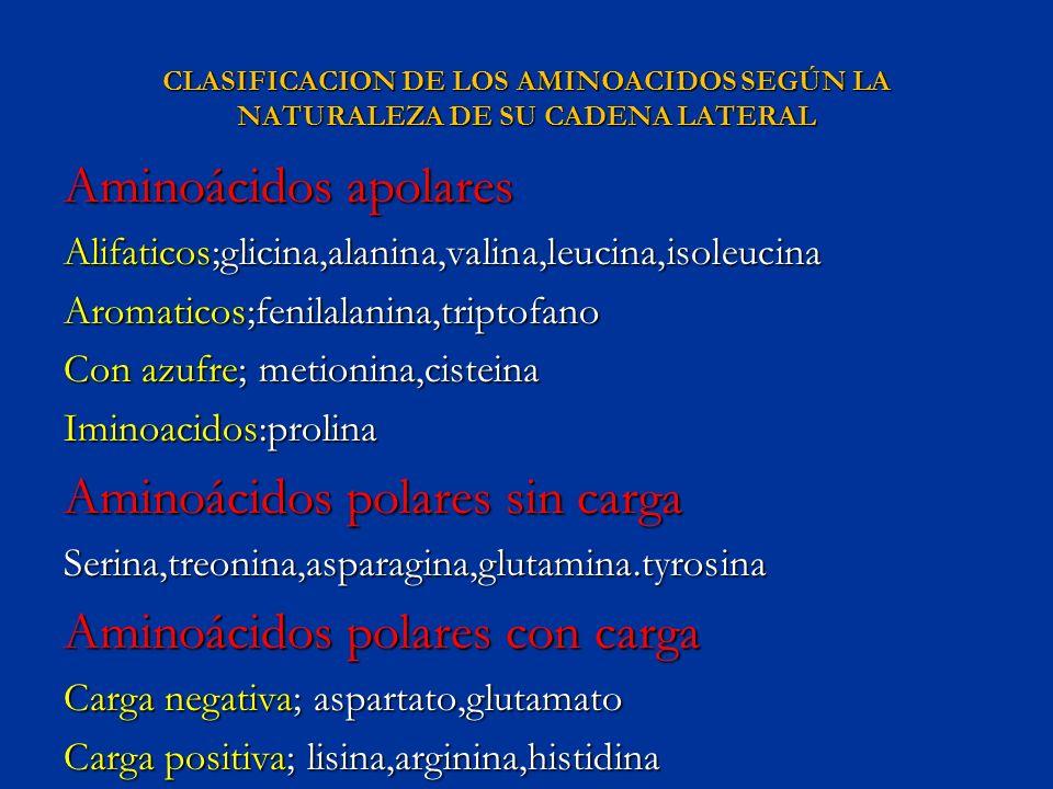 CLASIFICACION DE LOS AMINOACIDOS SEGÚN LA NATURALEZA DE SU CADENA LATERAL Aminoácidos apolares Alifaticos;glicina,alanina,valina,leucina,isoleucina Ar
