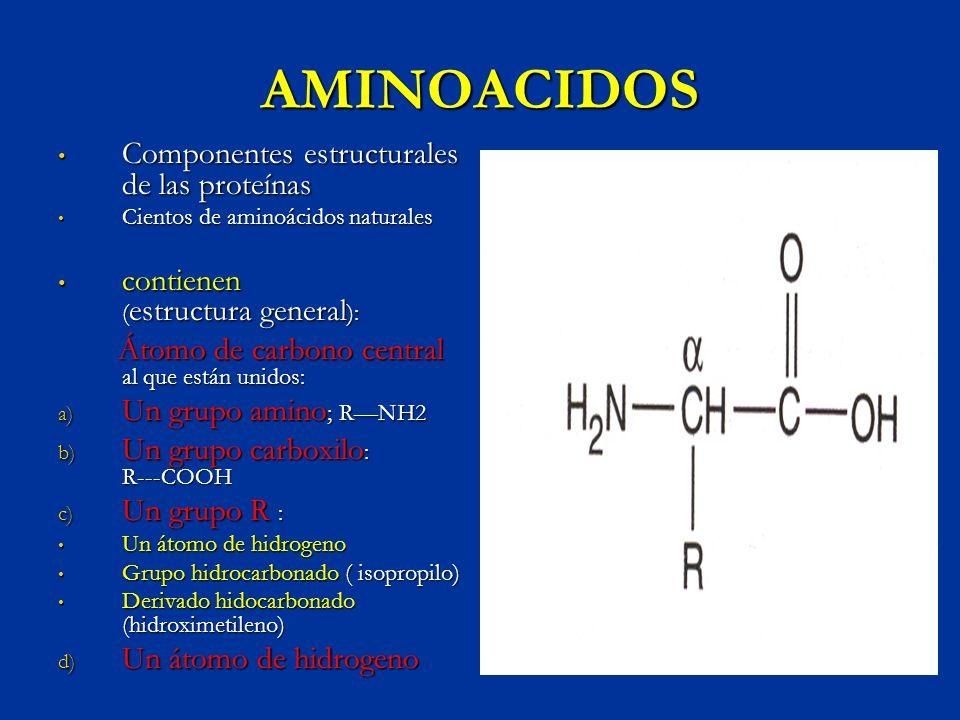 AMINOACIDOS Componentes estructurales de las proteínas Componentes estructurales de las proteínas Cientos de aminoácidos naturales Cientos de aminoáci