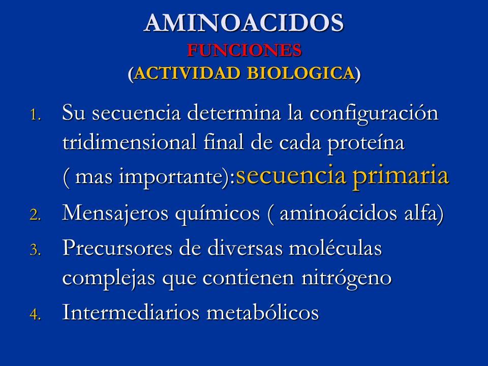 AMINOACIDOS FUNCIONES (ACTIVIDAD BIOLOGICA) 1. Su secuencia determina la configuración tridimensional final de cada proteína ( mas importante): secuen