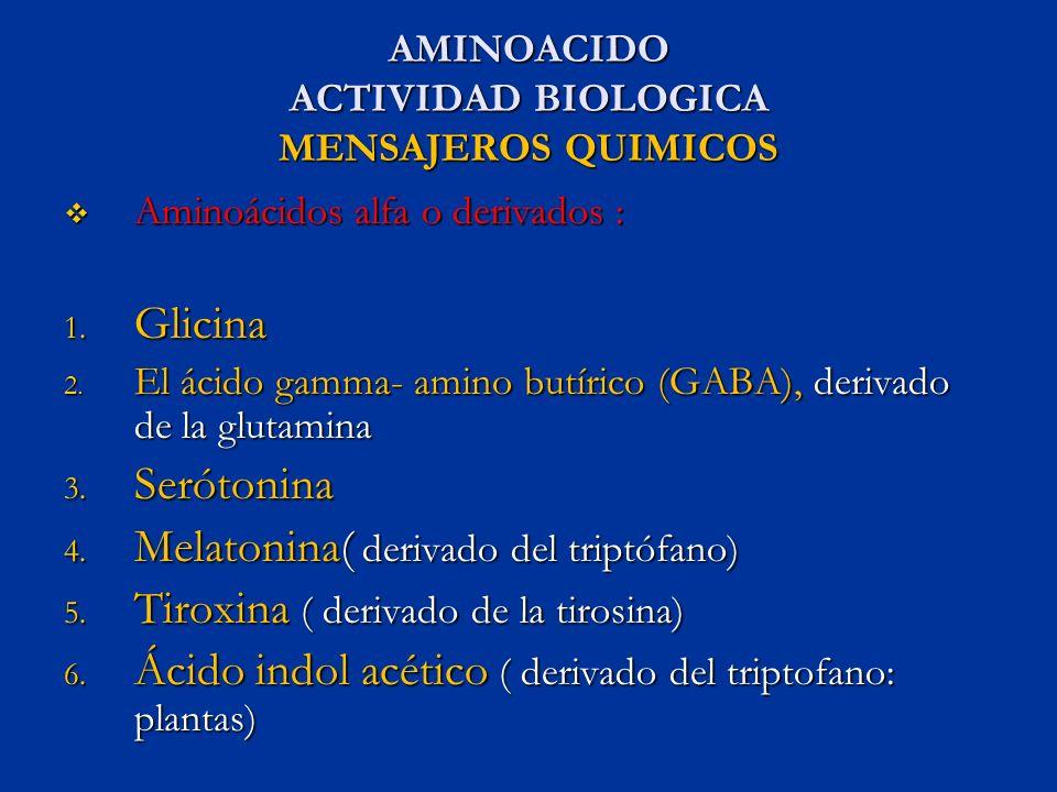 AMINOACIDO ACTIVIDAD BIOLOGICA MENSAJEROS QUIMICOS Aminoácidos alfa o derivados : Aminoácidos alfa o derivados : 1. Glicina 2. El ácido gamma- amino b