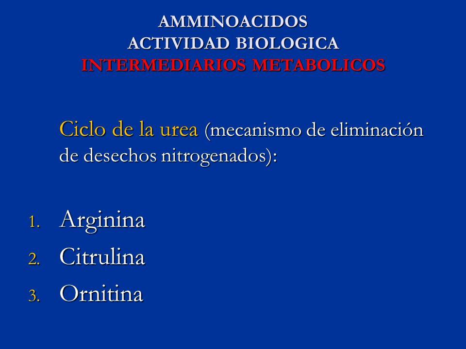 AMMINOACIDOS ACTIVIDAD BIOLOGICA INTERMEDIARIOS METABOLICOS Ciclo de la urea (mecanismo de eliminación de desechos nitrogenados): Ciclo de la urea (me
