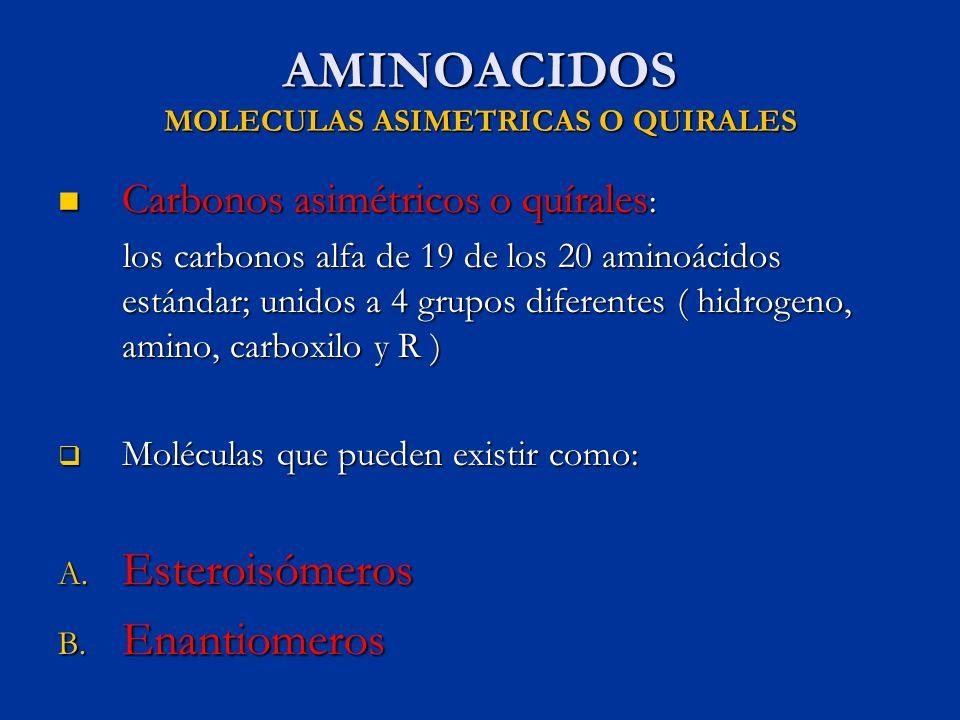 AMINOACIDOS MOLECULAS ASIMETRICAS O QUIRALES Carbonos asimétricos o quírales : Carbonos asimétricos o quírales : los carbonos alfa de 19 de los 20 ami