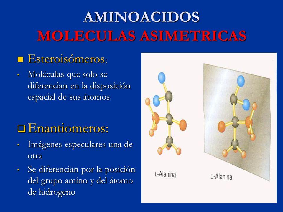 AMINOACIDOS MOLECULAS ASIMETRICAS Esteroisómeros ; Esteroisómeros ; Moléculas que solo se diferencian en la disposición espacial de sus átomos Molécul