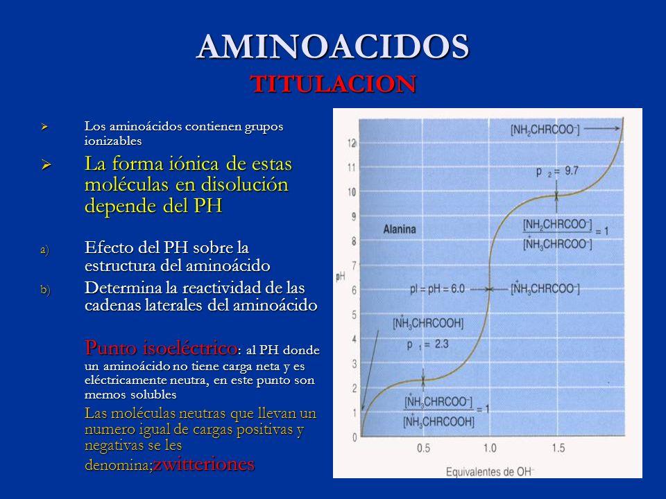 AMINOACIDOS TITULACION Los aminoácidos contienen grupos ionizables Los aminoácidos contienen grupos ionizables La forma iónica de estas moléculas en d