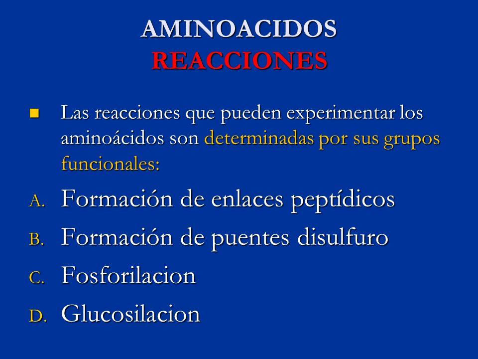 AMINOACIDOS REACCIONES Las reacciones que pueden experimentar los aminoácidos son determinadas por sus grupos funcionales: Las reacciones que pueden e