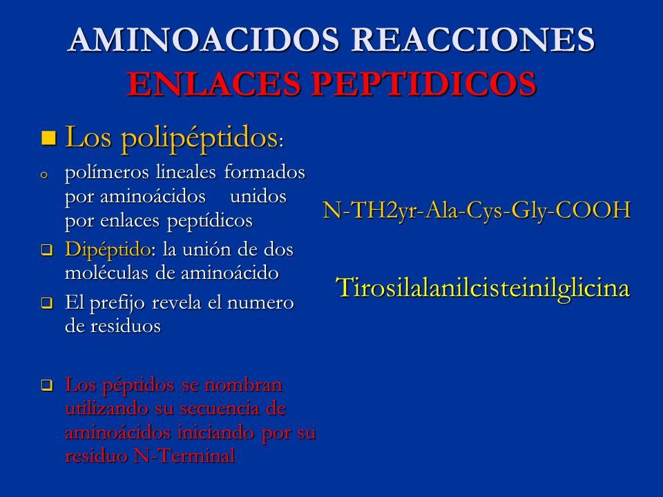 AMINOACIDOS REACCIONES ENLACES PEPTIDICOS Los polipéptidos : Los polipéptidos : o polímeros lineales formados por aminoácidos unidos por enlaces peptí