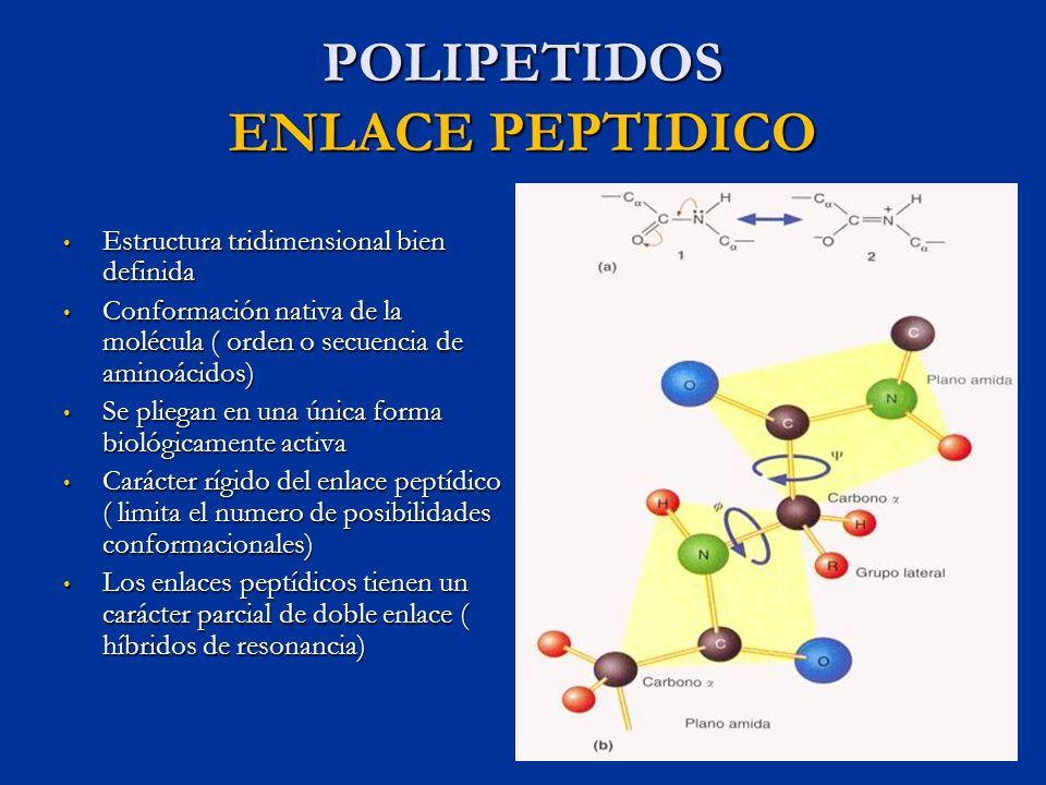 POLIPETIDOS ENLACE PEPTIDICO Estructura tridimensional bien definida Estructura tridimensional bien definida Conformación nativa de la molécula ( orde