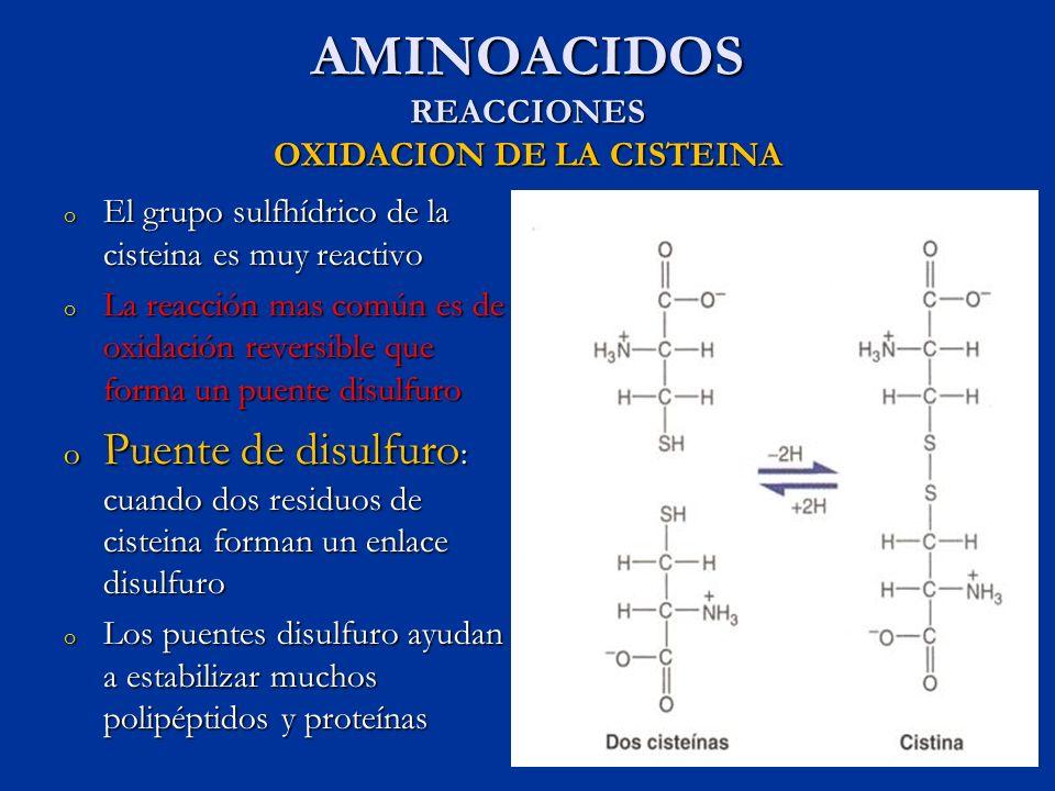 AMINOACIDOS REACCIONES OXIDACION DE LA CISTEINA o El grupo sulfhídrico de la cisteina es muy reactivo o La reacción mas común es de oxidación reversib
