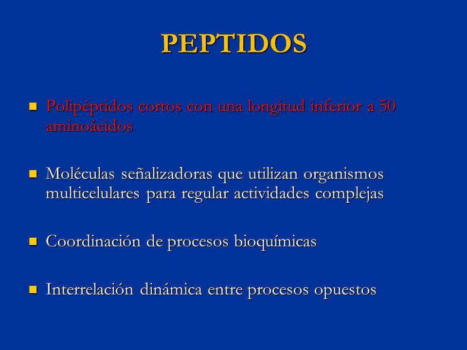 PEPTIDOS Polipéptidos cortos con una longitud inferior a 50 aminoácidos Polipéptidos cortos con una longitud inferior a 50 aminoácidos Moléculas señal