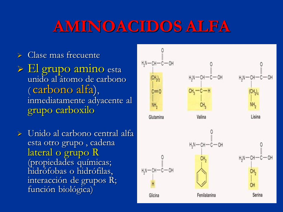 AMINOACIDOS ALFA Clase mas frecuente Clase mas frecuente El grupo amino esta unido al átomo de carbono ( carbono alfa), inmediatamente adyacente al gr
