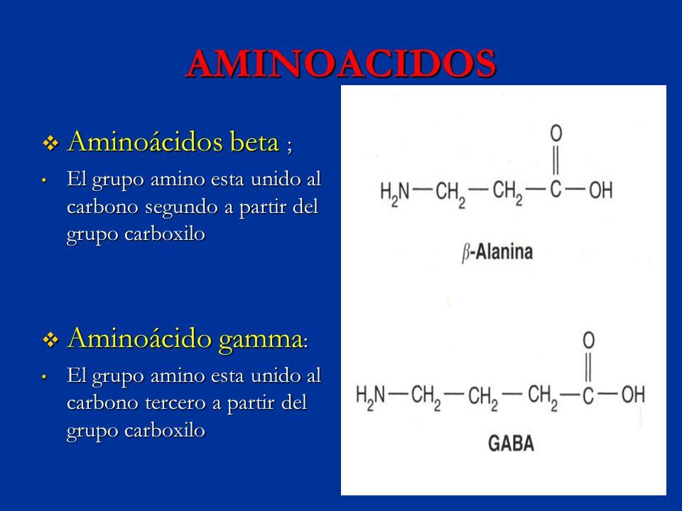 AMINOACIDOS Aminoácidos beta ; Aminoácidos beta ; El grupo amino esta unido al carbono segundo a partir del grupo carboxilo El grupo amino esta unido