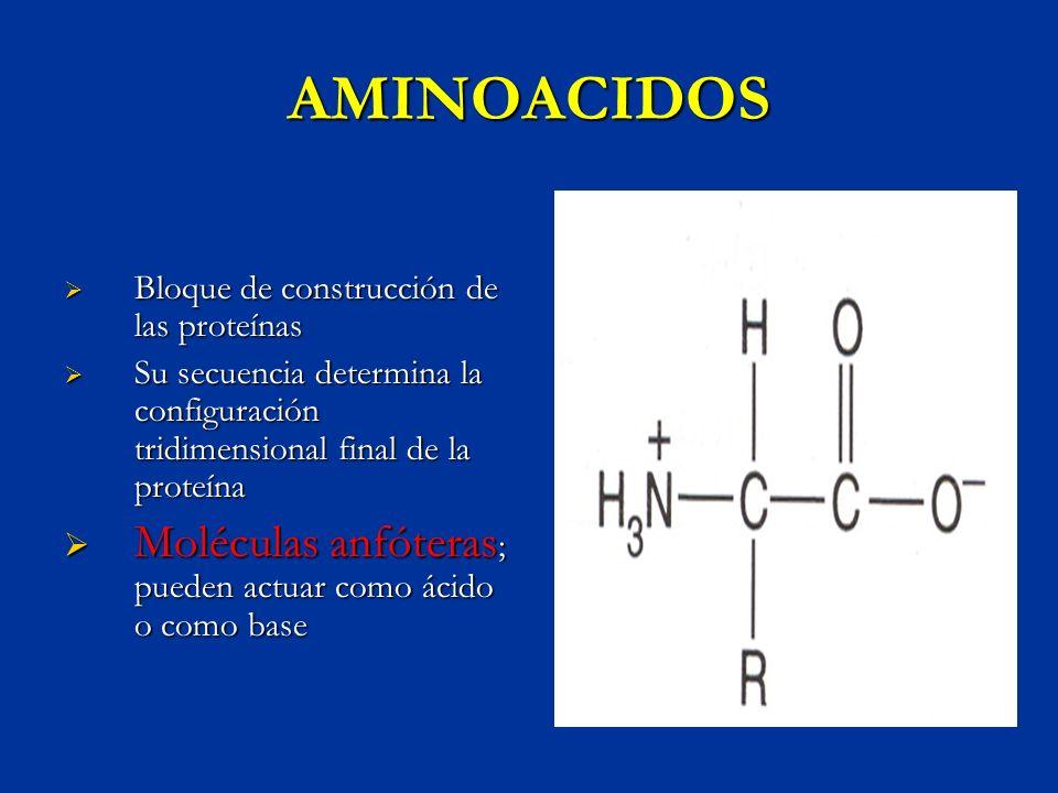 CLASIFICACION DE LOS AMINOACIDOS SEGÚN LA NATURALEZA DE SU CADENA LATERAL Aminoácidos apolares Alifaticos;glicina,alanina,valina,leucina,isoleucina Aromaticos;fenilalanina,triptofano Con azufre; metionina,cisteina Iminoacidos:prolina Aminoácidos polares sin carga Serina,treonina,asparagina,glutamina.tyrosina Aminoácidos polares con carga Carga negativa; aspartato,glutamato Carga positiva; lisina,arginina,histidina