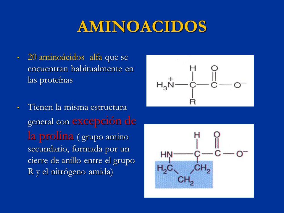 AMINOACIDOS ESENCIALES En la naturaleza 300 aminoácidos diferentes En la naturaleza 300 aminoácidos diferentes Los seres vivos 20 aminoácidos para sintetizar proteínas Los seres vivos 20 aminoácidos para sintetizar proteínas 9 son esenciales para el ser humano (debido a que sus cadenas laterales o aromáticas no pueden ser sintetizadas por el ser humano, o la secuencia de átomos de azufre o grupos amino dentro de la cadena de átomos de carbono que los forman) 9 son esenciales para el ser humano (debido a que sus cadenas laterales o aromáticas no pueden ser sintetizadas por el ser humano, o la secuencia de átomos de azufre o grupos amino dentro de la cadena de átomos de carbono que los forman)