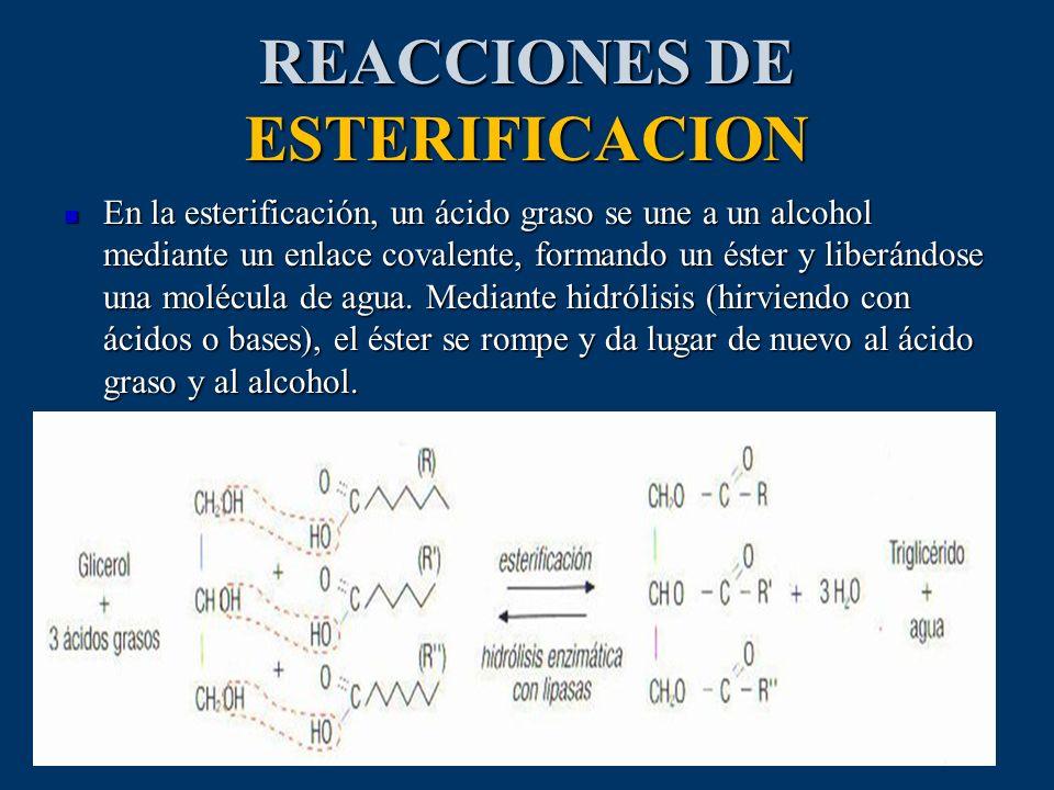 REACCIONES DE ESTERIFICACION En la esterificación, un ácido graso se une a un alcohol mediante un enlace covalente, formando un éster y liberándose un