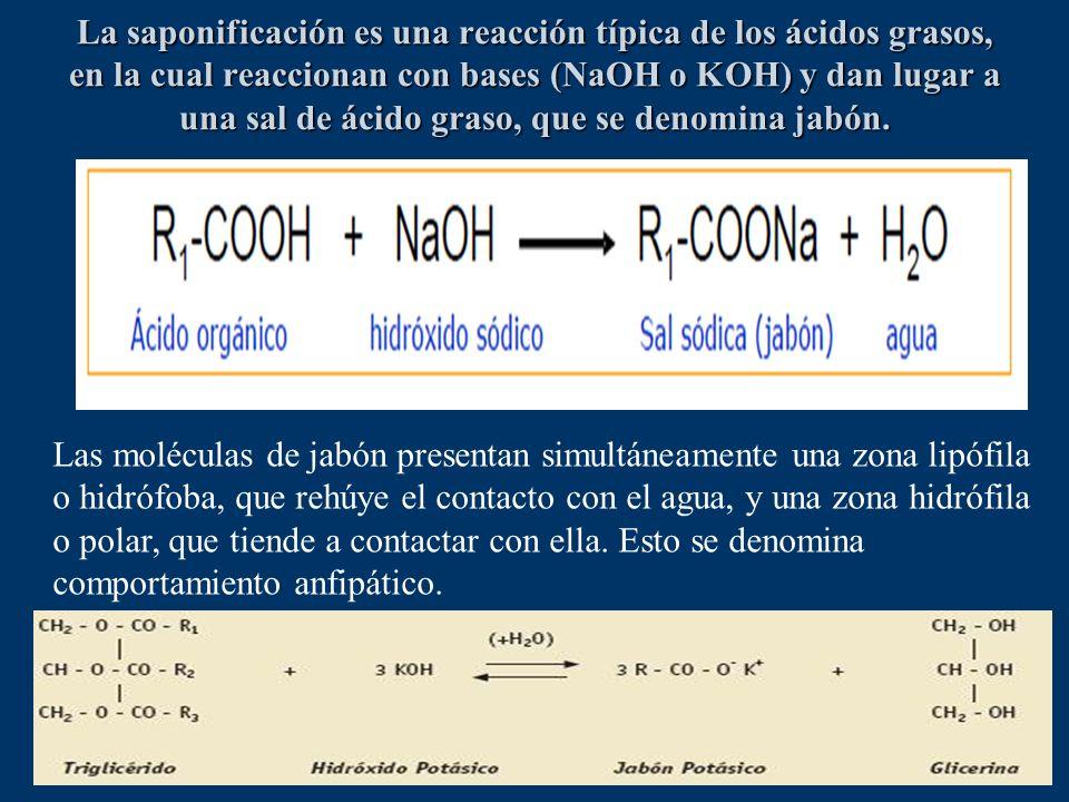 La saponificación es una reacción típica de los ácidos grasos, en la cual reaccionan con bases (NaOH o KOH) y dan lugar a una sal de ácido graso, que