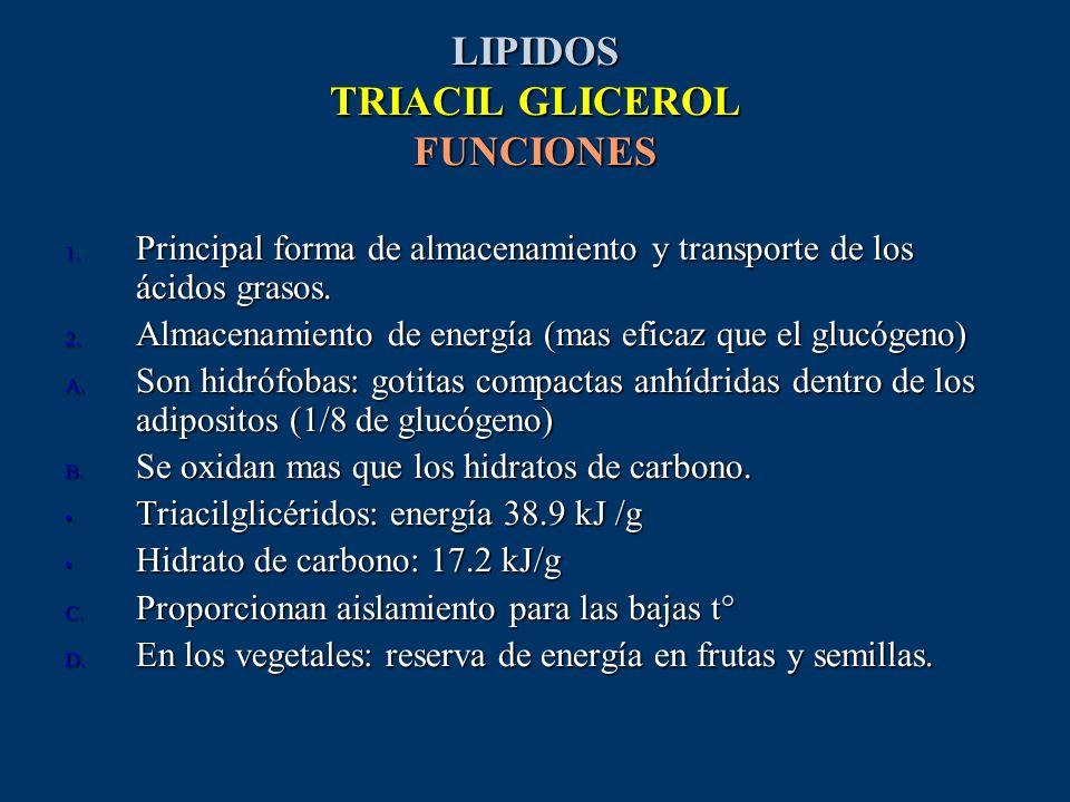 LIPIDOS TRIACIL GLICEROL FUNCIONES 1. Principal forma de almacenamiento y transporte de los ácidos grasos. 2. Almacenamiento de energía (mas eficaz qu