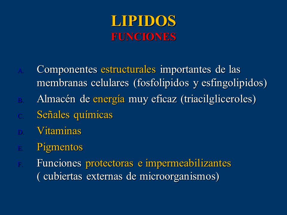 LIPIDOS FUNCIONES A. Componentes estructurales importantes de las membranas celulares (fosfolipidos y esfingolipidos) B. Almacén de energía muy eficaz