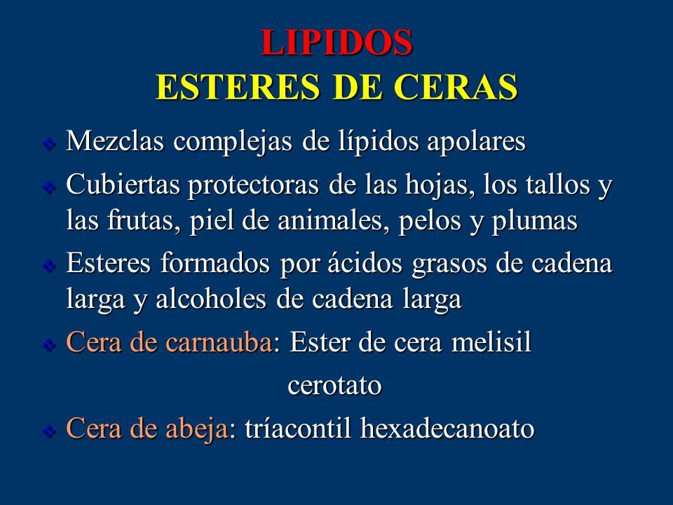 LIPIDOS ESTERES DE CERAS Mezclas complejas de lípidos apolares Mezclas complejas de lípidos apolares Cubiertas protectoras de las hojas, los tallos y