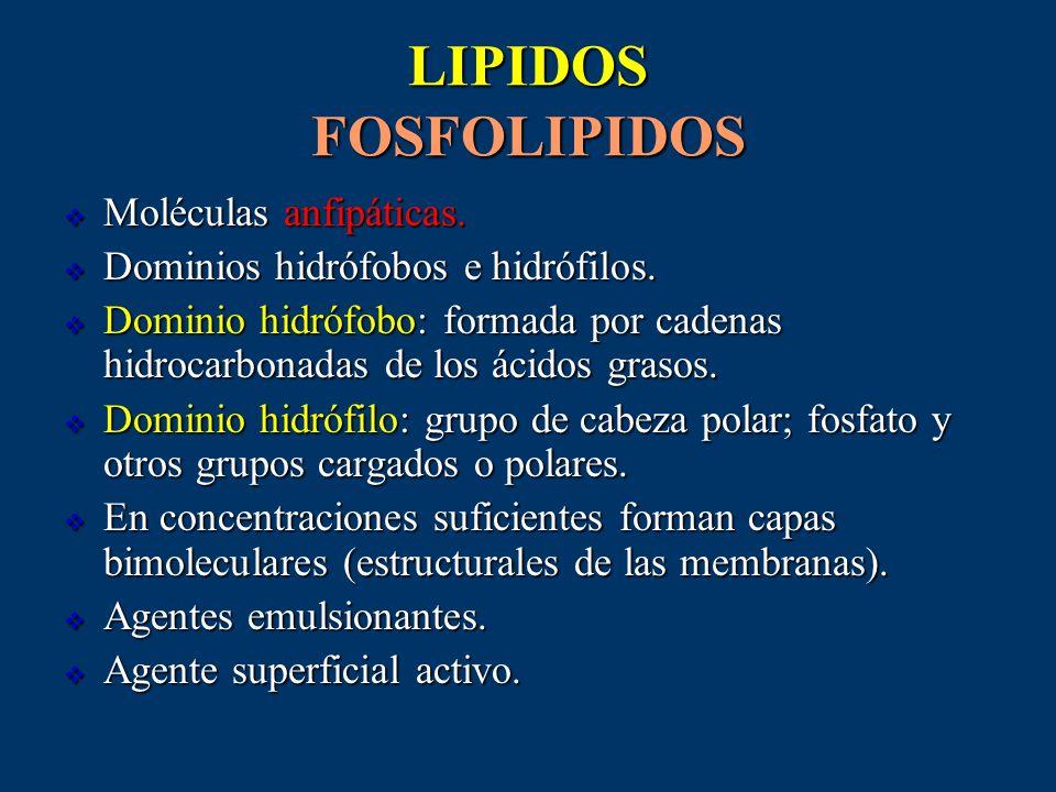 LIPIDOS FOSFOLIPIDOS Moléculas anfipáticas. Moléculas anfipáticas. Dominios hidrófobos e hidrófilos. Dominios hidrófobos e hidrófilos. Dominio hidrófo