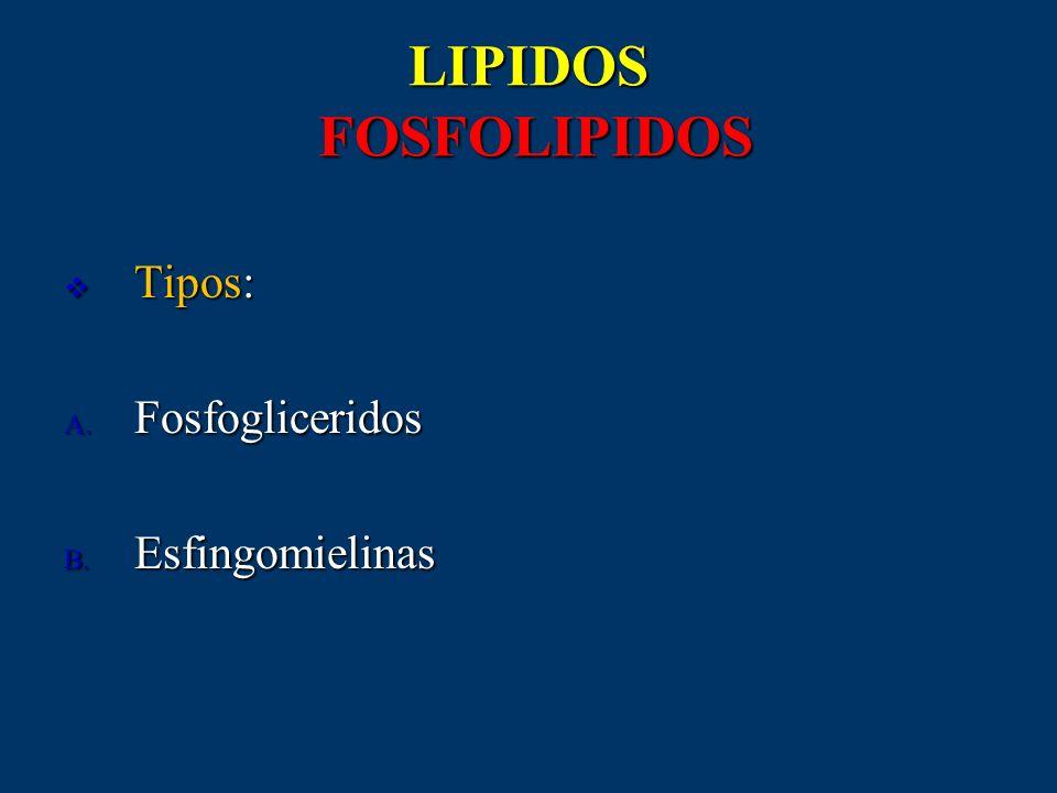 LIPIDOS FOSFOLIPIDOS Tipos: Tipos: A. Fosfogliceridos B. Esfingomielinas