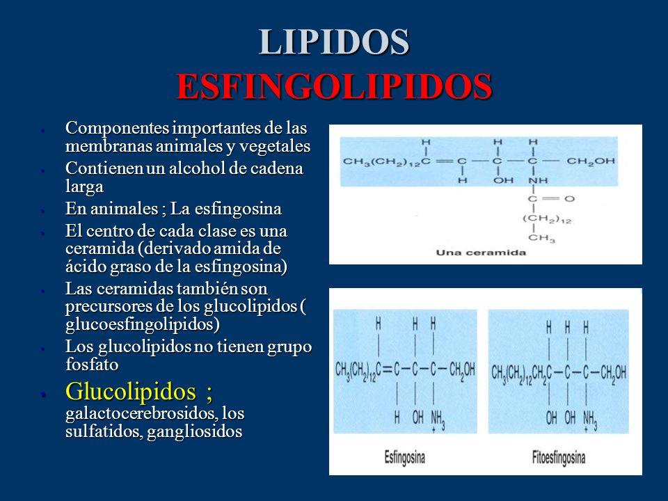 LIPIDOS ESFINGOLIPIDOS Componentes importantes de las membranas animales y vegetales Componentes importantes de las membranas animales y vegetales Con