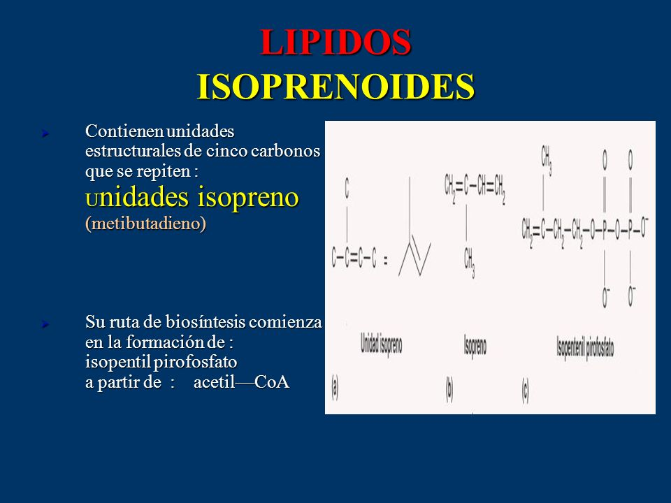 LIPIDOS ISOPRENOIDES Contienen unidades estructurales de cinco carbonos que se repiten : U nidades isopreno (metibutadieno) Contienen unidades estruct