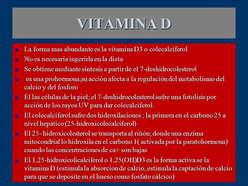 VITAMINA D La forma mas abundante es la vitamina D3 o colecalciferol La forma mas abundante es la vitamina D3 o colecalciferol No es necesaria ingerir