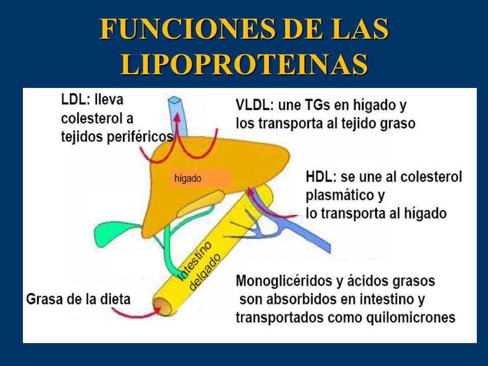 FUNCIONES DE LAS LIPOPROTEINAS