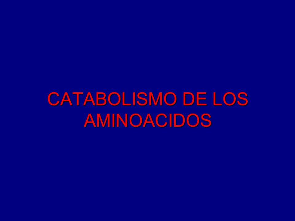 METABOLISMO DE LOS AMINOACIDOS PRODUCCION DE AMONIACO La mayoría de la degradación de los aminoácidos es la desaminación oxidativa.