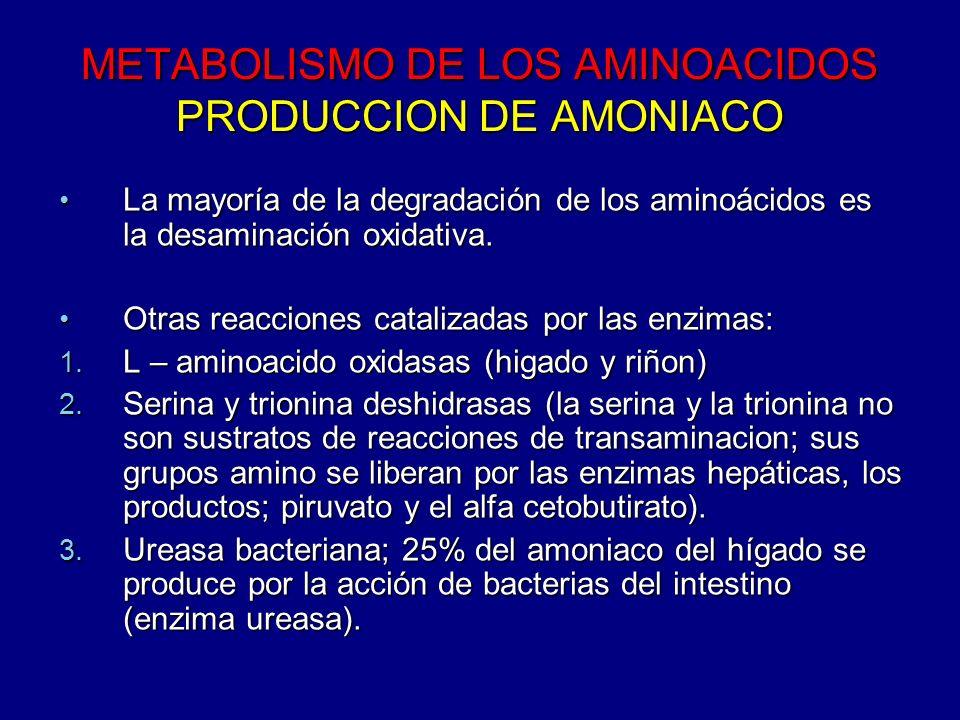 METABOLISMO DE LOS AMINOACIDOS PRODUCCION DE AMONIACO La mayoría de la degradación de los aminoácidos es la desaminación oxidativa. La mayoría de la d