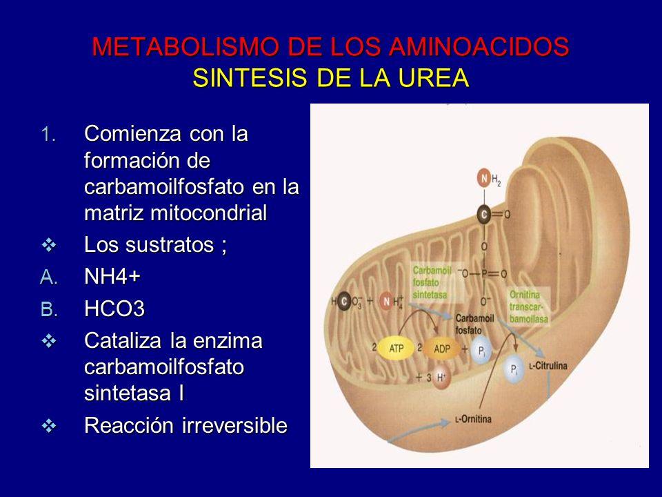 METABOLISMO DE LOS AMINOACIDOS SINTESIS DE LA UREA 1. Comienza con la formación de carbamoilfosfato en la matriz mitocondrial Los sustratos ; Los sust