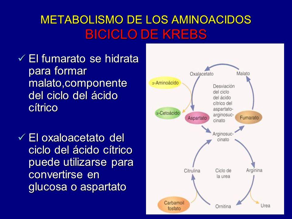 METABOLISMO DE LOS AMINOACIDOS BICICLO DE KREBS El fumarato se hidrata para formar malato,componente del ciclo del ácido cítrico El fumarato se hidrat
