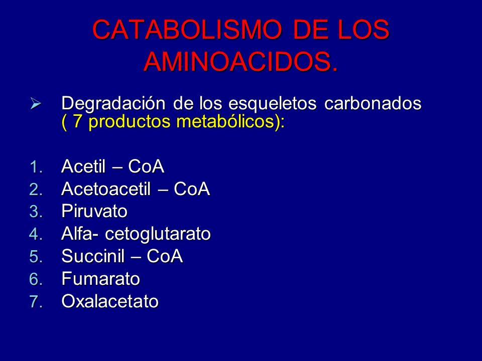 CATABOLISMO DE LOS AMINOACIDOS. Degradación de los esqueletos carbonados ( 7 productos metabólicos): Degradación de los esqueletos carbonados ( 7 prod