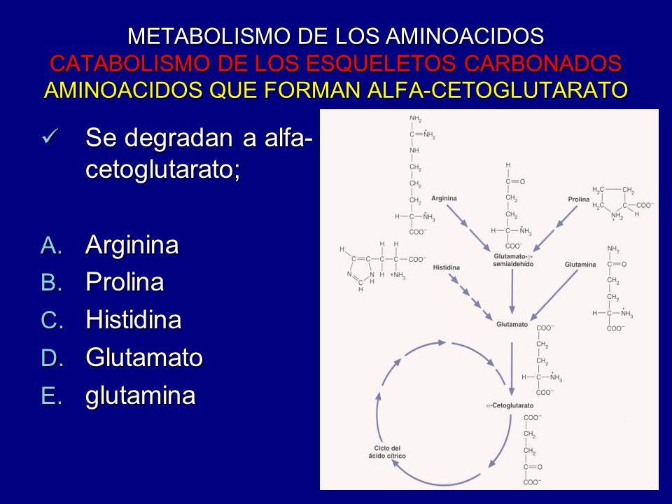 METABOLISMO DE LOS AMINOACIDOS CATABOLISMO DE LOS ESQUELETOS CARBONADOS AMINOACIDOS QUE FORMAN ALFA-CETOGLUTARATO Se degradan a alfa- cetoglutarato; S
