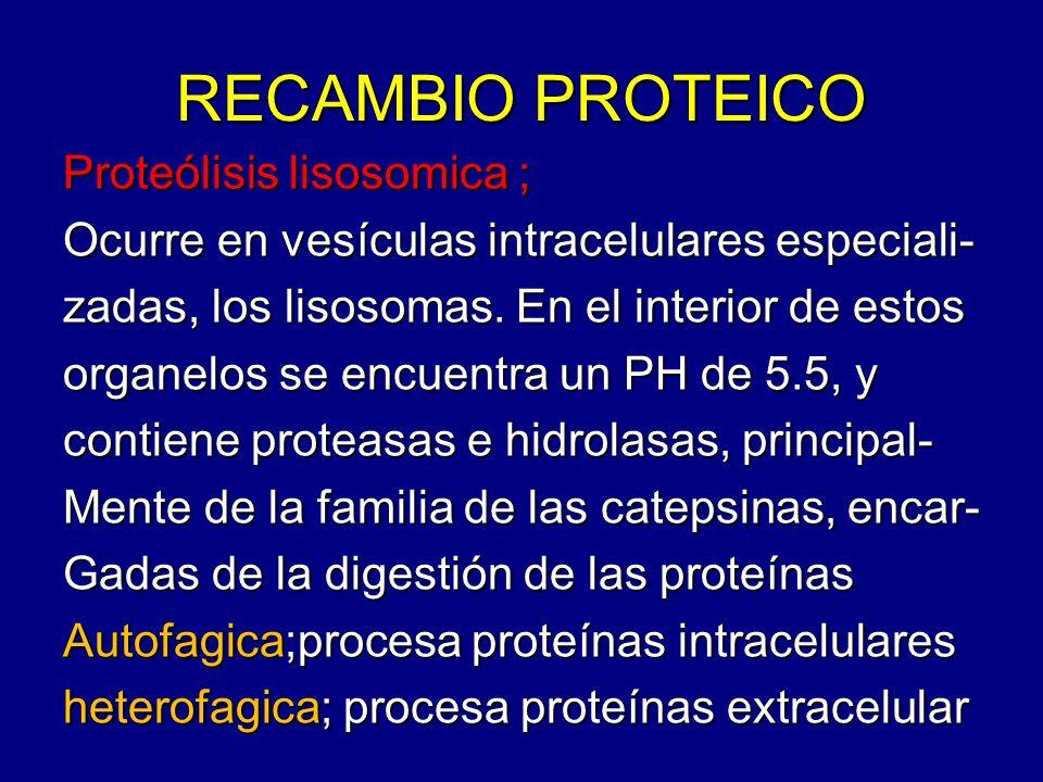 RECAMBIO PROTEICO Proteólisis lisosomica ; Ocurre en vesículas intracelulares especiali- zadas, los lisosomas. En el interior de estos organelos se en
