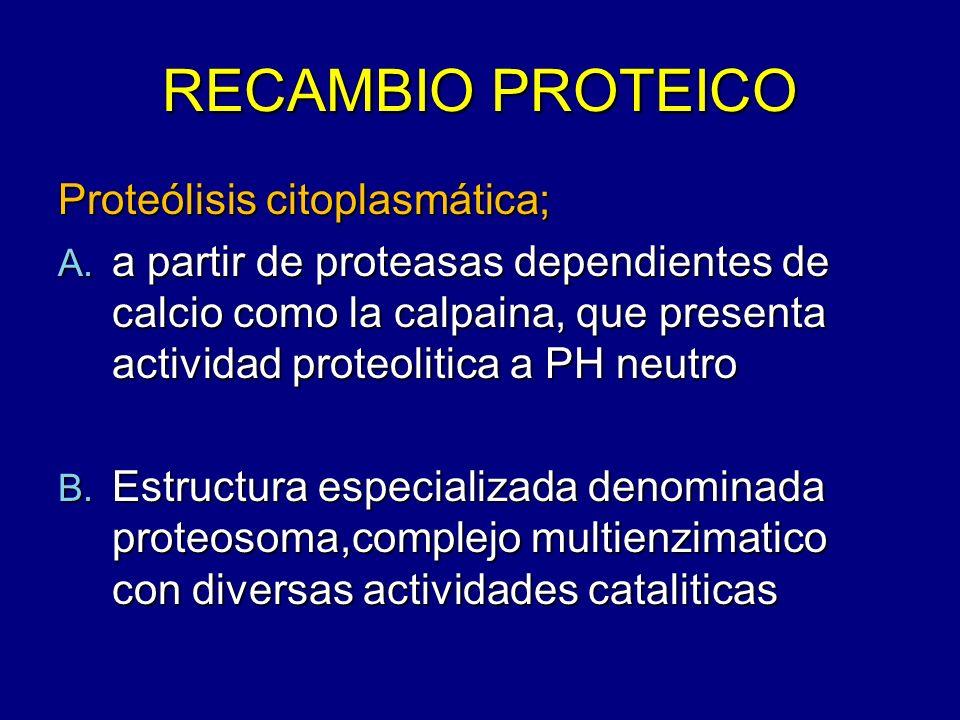 RECAMBIO PROTEICO Proteólisis citoplasmática; A. a partir de proteasas dependientes de calcio como la calpaina, que presenta actividad proteolitica a