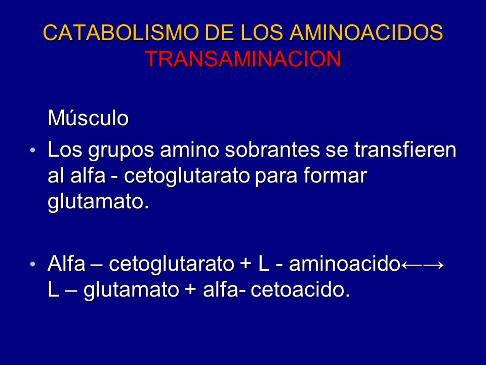 CATABOLISMO DE LOS AMINOACIDOS TRANSAMINACION Músculo Los grupos amino sobrantes se transfieren al alfa - cetoglutarato para formar glutamato. Los gru