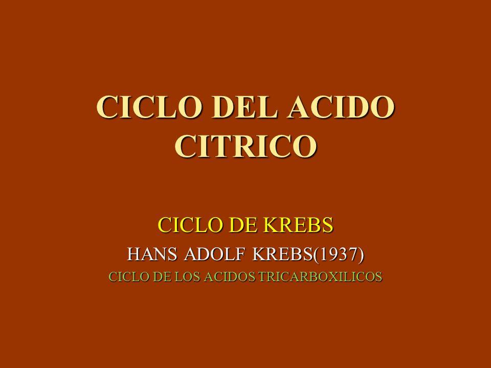 CICLO DEL ACIDO CITRICO CICLO DE KREBS HANS ADOLF KREBS(1937) CICLO DE LOS ACIDOS TRICARBOXILICOS
