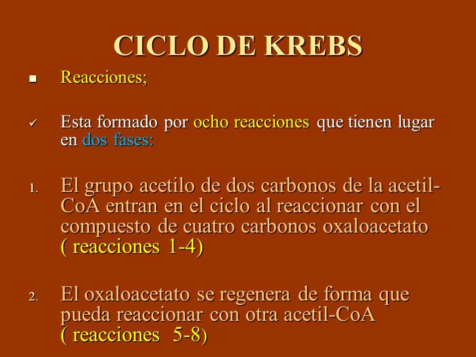 CICLO DE KREBS Reacciones; Reacciones; Esta formado por ocho reacciones que tienen lugar en dos fases: Esta formado por ocho reacciones que tienen lug